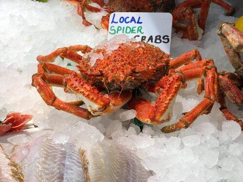 local-spider-crab